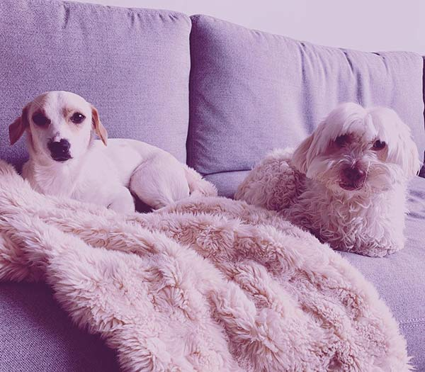Image of McDowell's dogs, Dale and Charlie